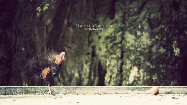 batucaves_2011_04