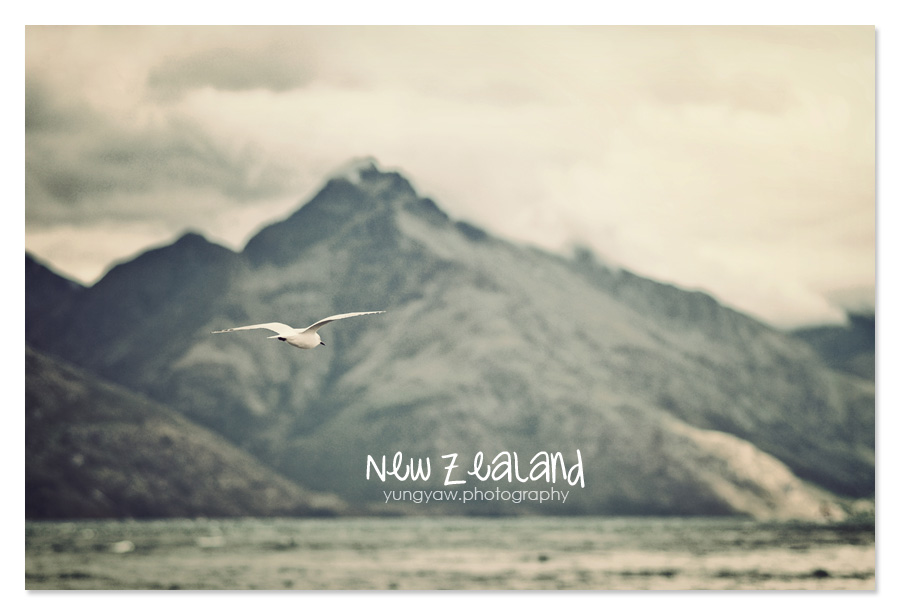 NewZealand_16