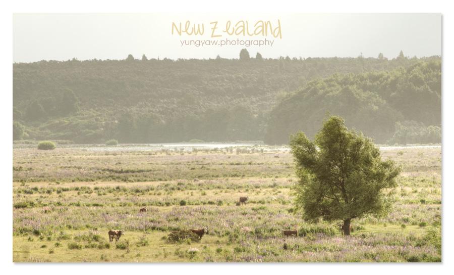 NewZealand_26